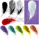 Link toVector color feathers