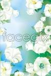 Link toVector daffodil