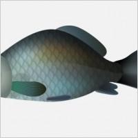 Link toVector fish - carp