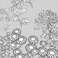 Link toVector line drawing of flowers-27(wild chrysanthemum)