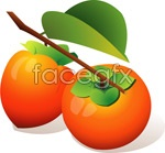Link toVector of persimmon
