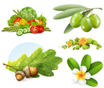 Link toVegetable and fruit tree branches vector