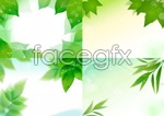 Link toVibrant leaves vector