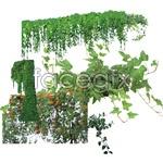 Link toVine plants psd1