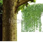 Link toVine plants psd2
