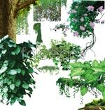 Link toVines flower vine psd
