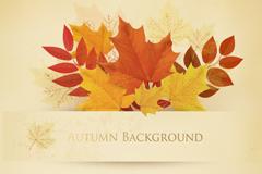 Link toVintage autumn leaves background vector