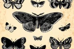 Link toVintage butterfly design vector
