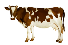Link toWater color brown and white cow vector