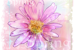 Link toWatercolor daisy pink vector