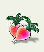 Link toWatercolor radish vector