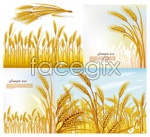 Link toWheat vector material