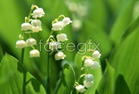 Link toWhite bell orchid hd picture