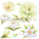 Link toWhite bright flowers vector