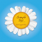 Link toWhite daisy graphics vector