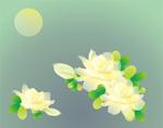Link toWhite gardenia vector