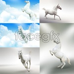 Link toWhite horse high definition pictures psd
