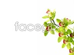 Link toWhite orchid pictures 1 psd
