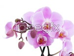 Link toWhite orchid pictures 2 psd