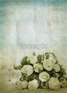 Link toWhite rose flower pictures