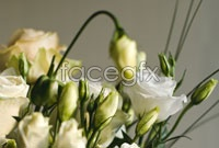 Link toWhite roses pictures hd