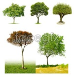 Link toWhite tree pictures psd
