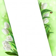 Link toWhite tulips vector background graphics free