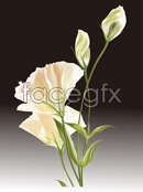 Link toWild lily vector