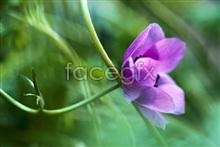Link topictures weed Wildflower
