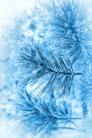 Link toWinter plant close-up picture download