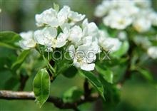 Link toWinter plum blossom picture material
