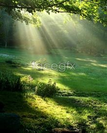 Link topicture sunlight of beam Wood