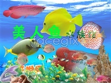 Link to-1 psd fish pet aquarium of World