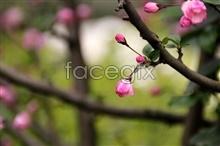Link toWuhan university sakura pictures