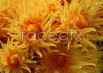 Link toYellow anemone psd