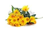 Link toYellow chrysanthemums psd