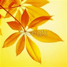 Link topicture material leaf Yellow