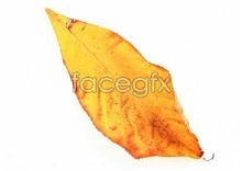Yellow long leaf