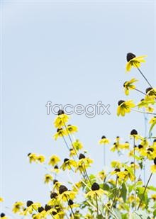 Link toYellow wild flowers