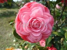 Link toYunnan red flower picture
